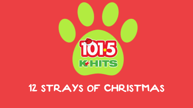 Day 2 of the 12 Strays of Christmas with Larry and Klay