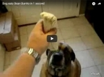 WATCH: Dog eats burrito in 1 second!