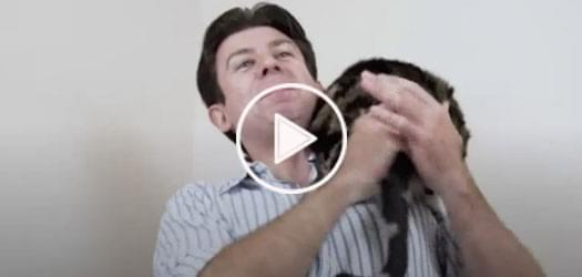 Watch: Video on How to Hold a Cat goes Viral