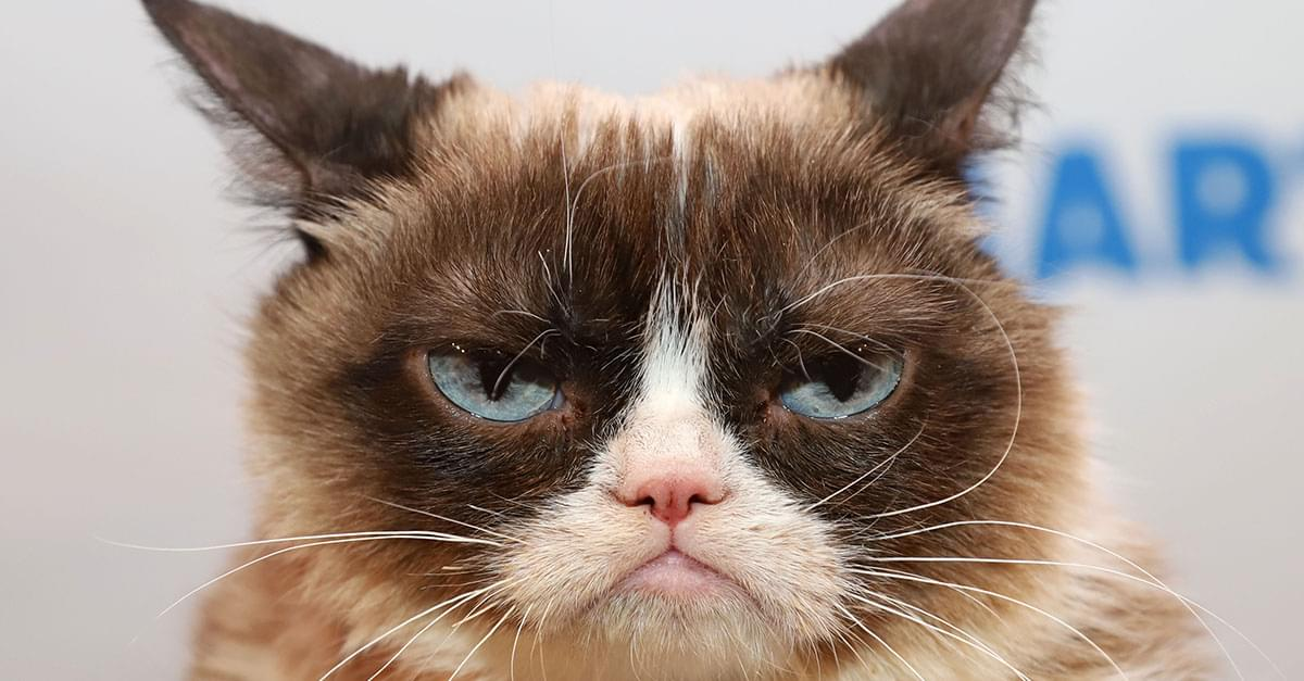 Internet Star Grumpy Cat Dies at Age 7