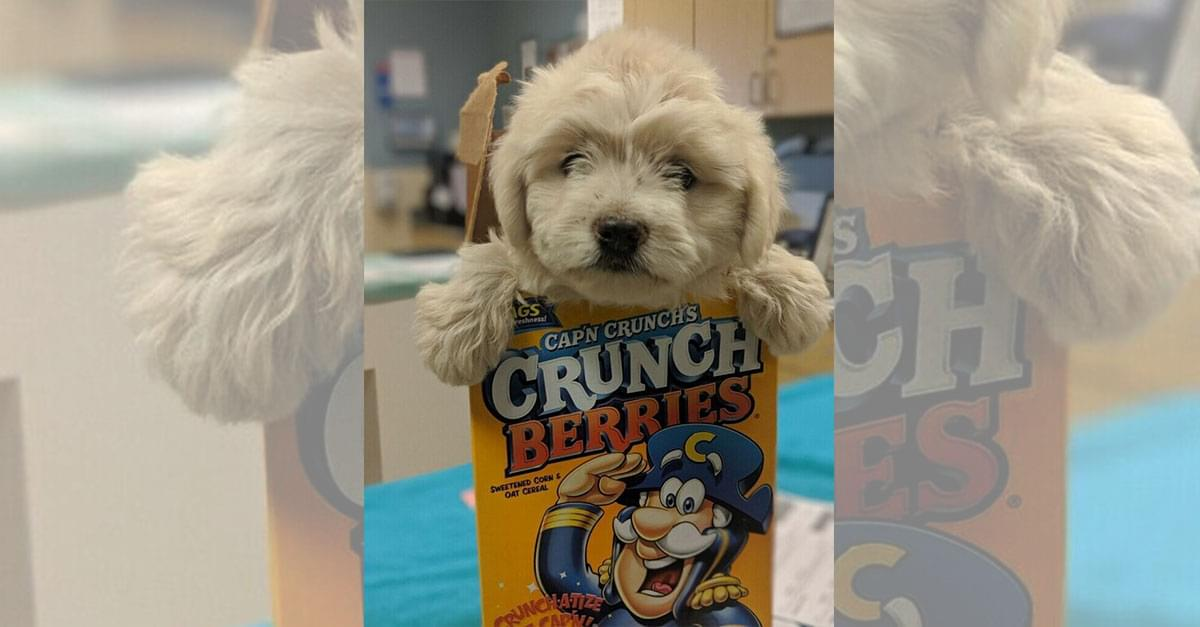 dog in cereal box