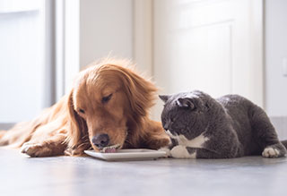 Pets eating leftovers
