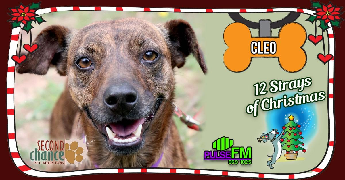 12 Strays of Christmas: Cleo