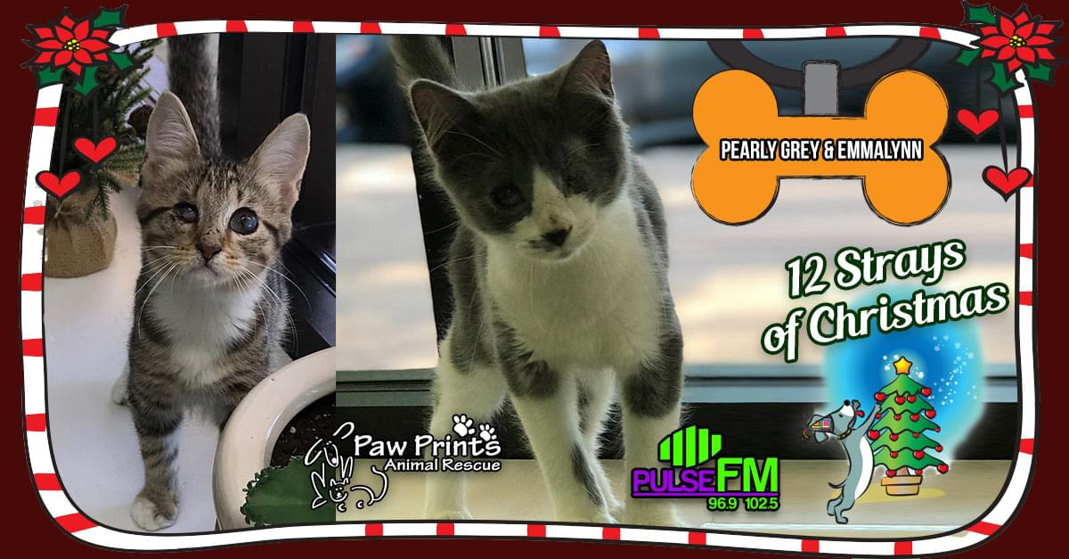 12 Strays of Christmas: Emmylynn and Pearlie Gray