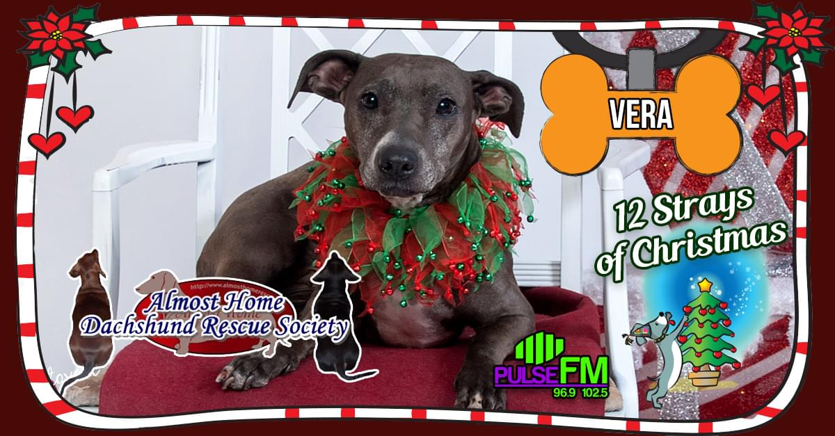 12 Strays of Christmas: Vera