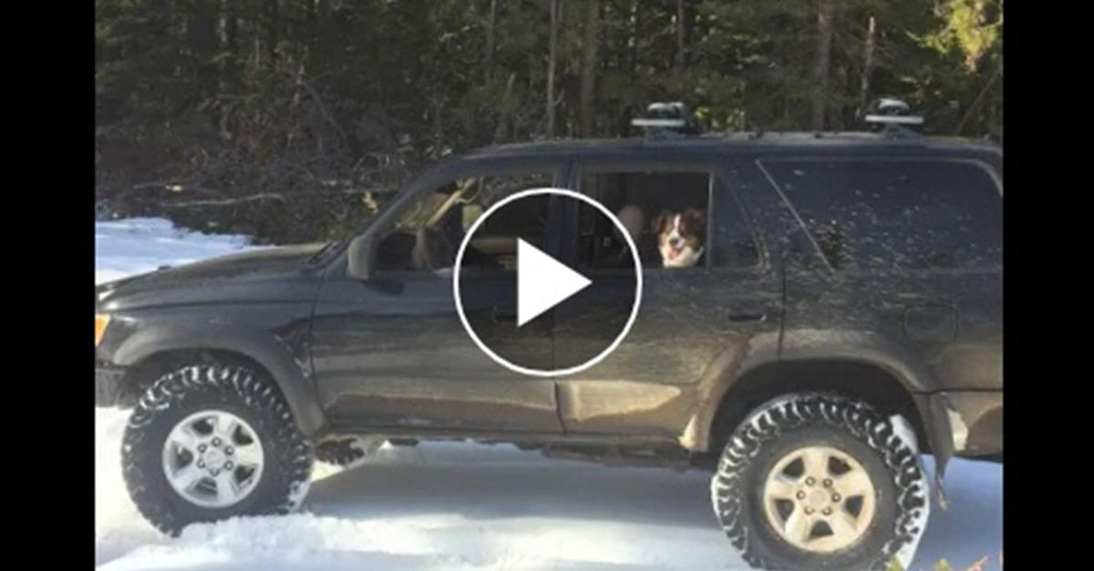Taco Bell Sauce Packets Save Man and Dog Trapped in Snow