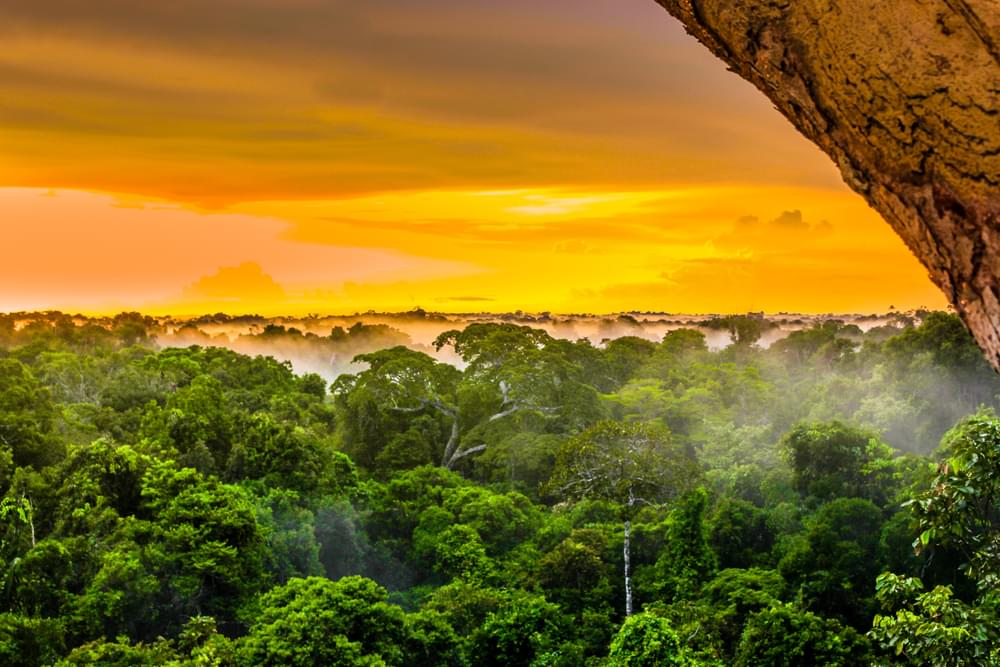 "The Amazon Rainforest aka ""The Planet's Lungs"", Are Burning At Record Rate"