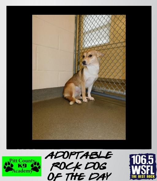 ADOPTED!!! Rock Dog of the Day 4/17/19