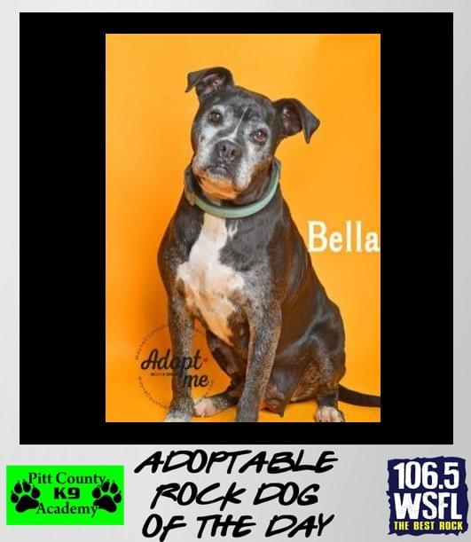 ADOPTED!!! Rock Dog of the Day 4-19-19