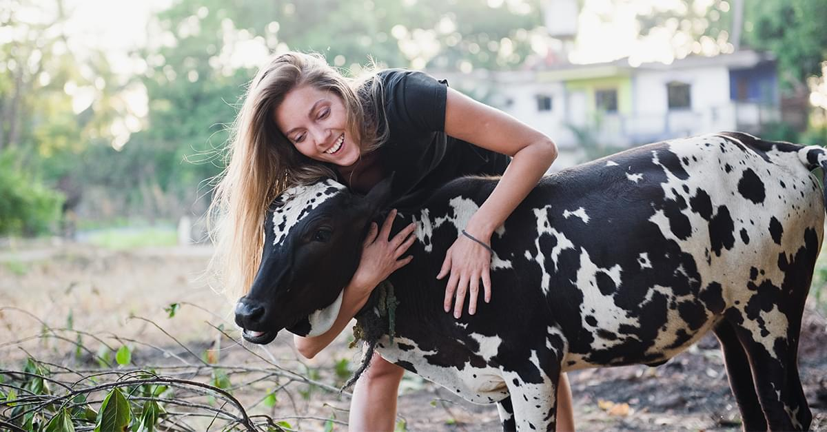 The New Trend for Wellness: Cow Hugging!