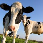 Funds from USDA Natural Resources Conservation Service Help with Livestock Mortality
