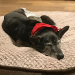 Luke Bryan's Recently Adopted Dog Has Passed Away