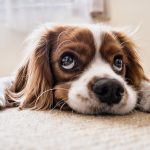 Is Your Sick Pet a Reason To Call In From Work?