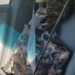 She Was Driving With A Dead Body…That She Got On Sale For Halloween