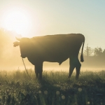 Additional Charges Filed Against Man Connected With Starving and Neglected Cattle