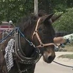 Mule known for pulling canal boat dies