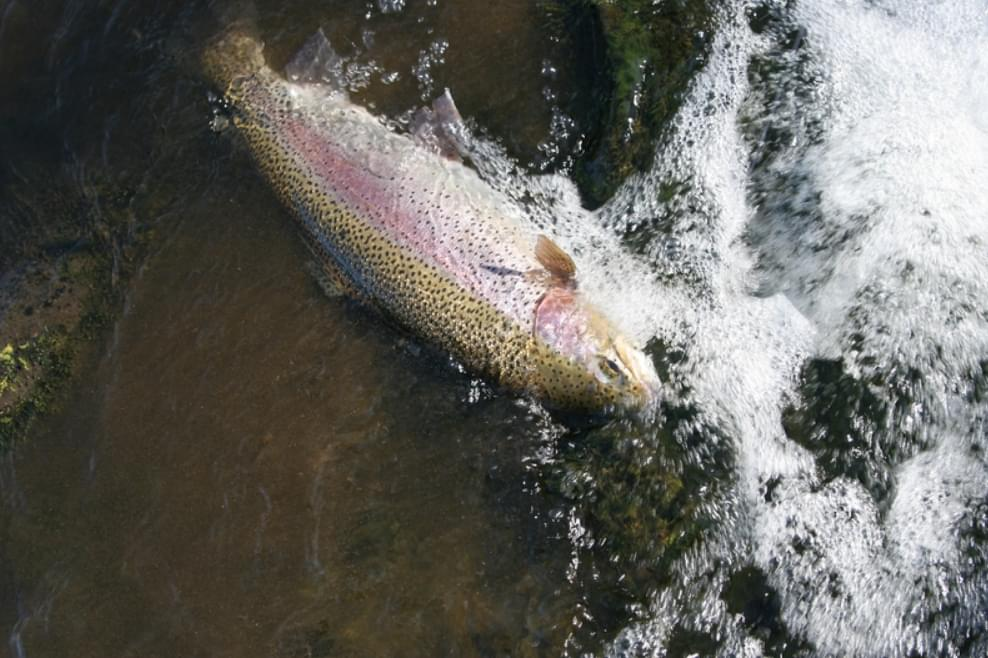 Trout season starts in April