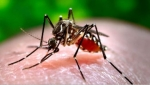 Two More Locations in Ogle County Found With West Nile Virus