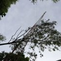 TREE laying on WRLO Tower