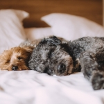 Turns Out Sleeping With Your Dog Will Give You A Better Nights Sleep