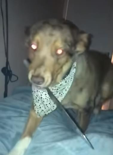 Woman Wakes up to Find Dog Standing Over Her w/ Knife in Mouth