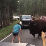 Alleged bison bully is well known to local police