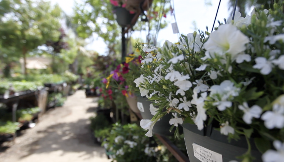 Just Some Of The Beautiful Offerings At Bolles Nursery In West Bakersfield 3255 Allen Road