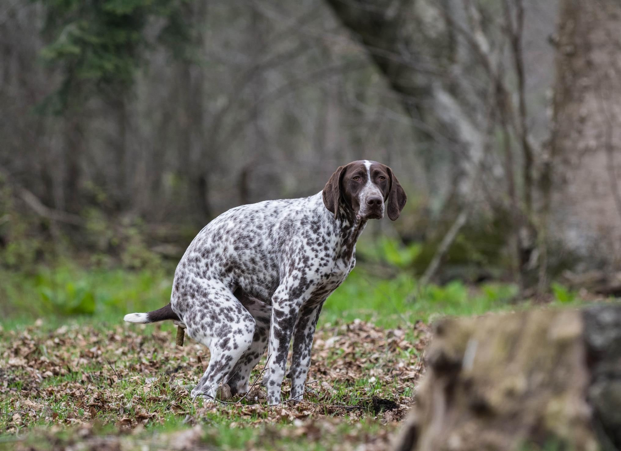 50 Shades of Dog Poop: How Dog Food Affects