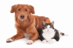 Science Solves The Age Old Question: Are Cats Smarter Than Dogs?