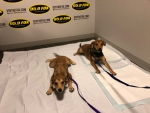 WATCH: Puppies In The Studio