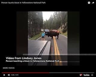 Bison Charges Guy Who Taunts Him On Roadway