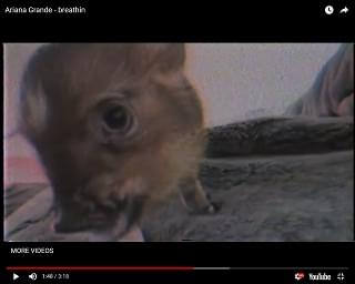 """Ariana Grande Casts Pet Pig In Video, Reveals She's Been Through """"Hell And Back"""""""