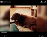 Viral Video of the Day: Dog Fart Cat Puke