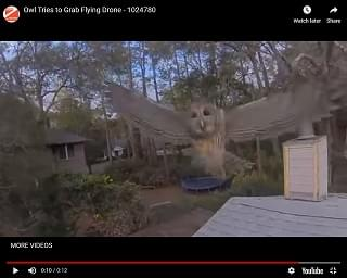 Viral Video: Owl Tries to Grab Flying Drone