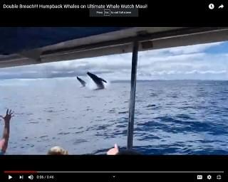 Viral Video: Whales Put On An Impressive Show