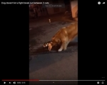Viral Video: Dog Stops Cat Fight