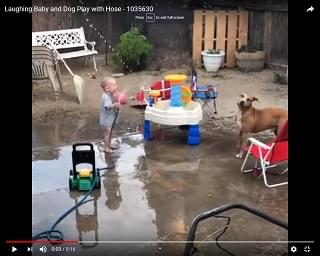 Viral Video: Laughing Baby and Dog Play with Hose