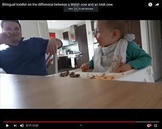 Viral Video: Bilingual Toddler Learns How to Moo in Welsh and Irish Accents