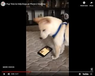 Viral Video of the Day: Pup Tries to Help Dogs on Phone