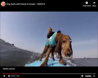 Viral Video: Dog Surfs With Owner
