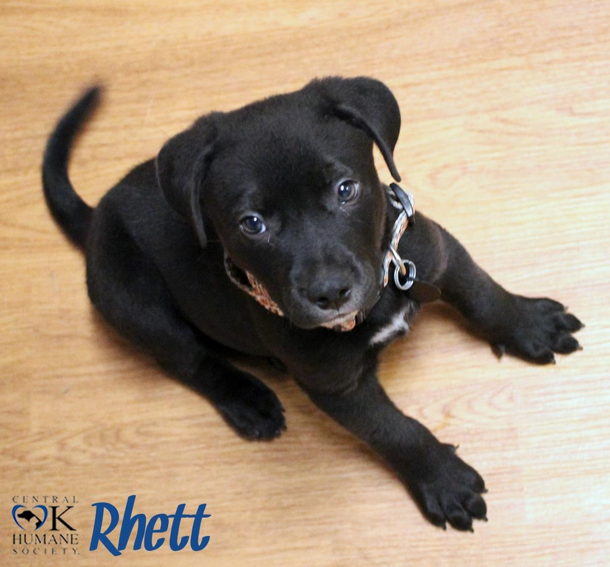 Pets of the Week 5-31-18