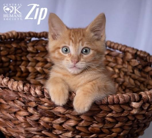 Pets of the Week 7-19-18