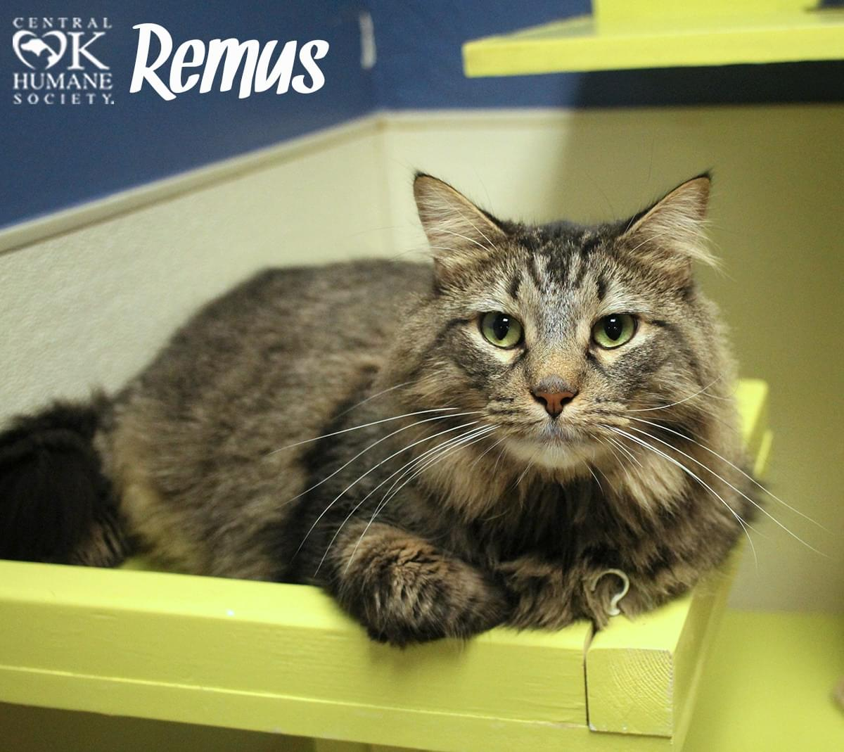 Pets of the Week 11-15-18