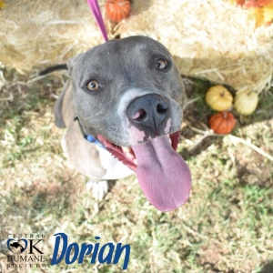 Pets of the Week 11-21-18