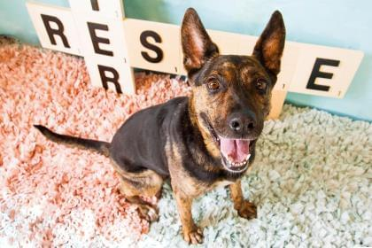 Pets of the Week 8-22-19