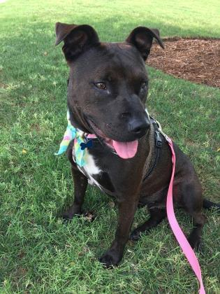 Pets of the Week 9-5-19