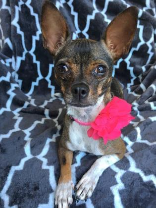 Pets of the Week 9-19-19