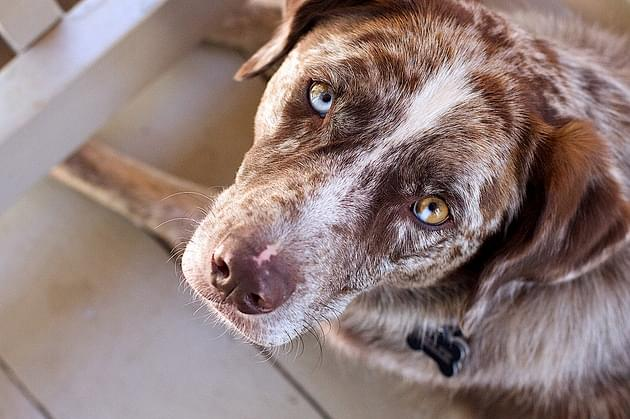 WVEL News/Holiday Scope: Keeping Your Pets Home Safe This Holiday Season