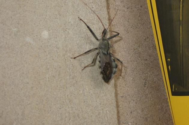 """WVEL News/Health Scope Now: """"The Kissing Bug"""""""