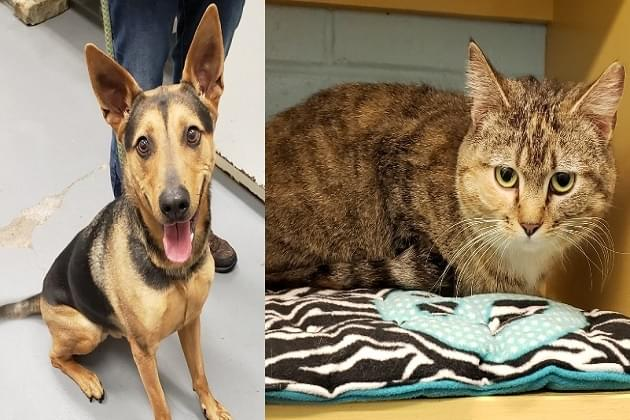 April's Pet's Of The Week From PCAPS